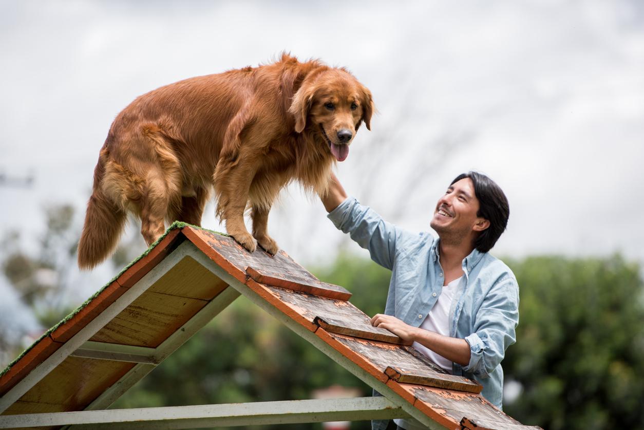 Eläinten kouluttamisen ja käsittelyn ammattilaiseksi