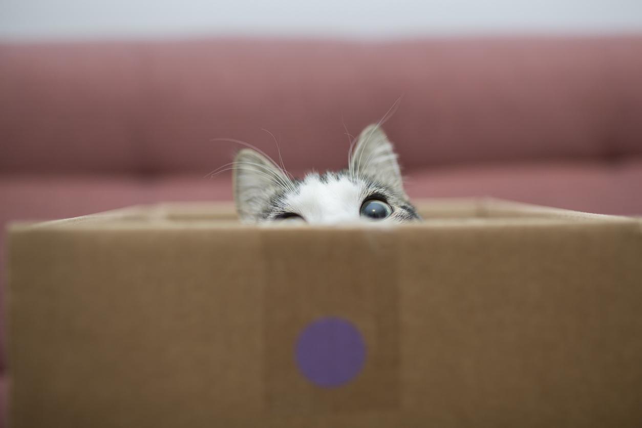 Itsenäinen kissa temppuradalla